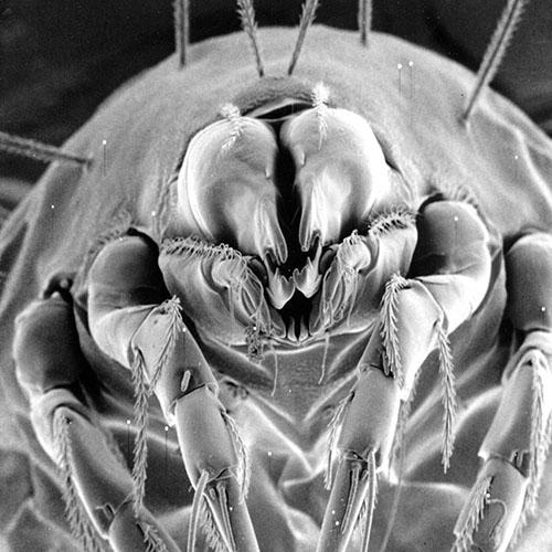 nozioni utili allergia agli acari