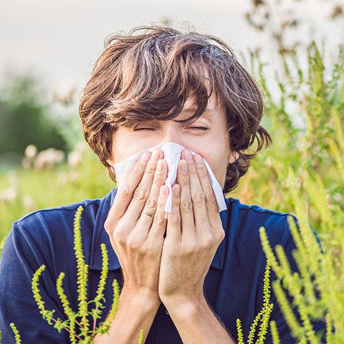 che cos'è l'allergia all'ambrosia