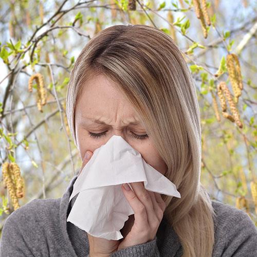 cos'è l'allergia alle betulacee