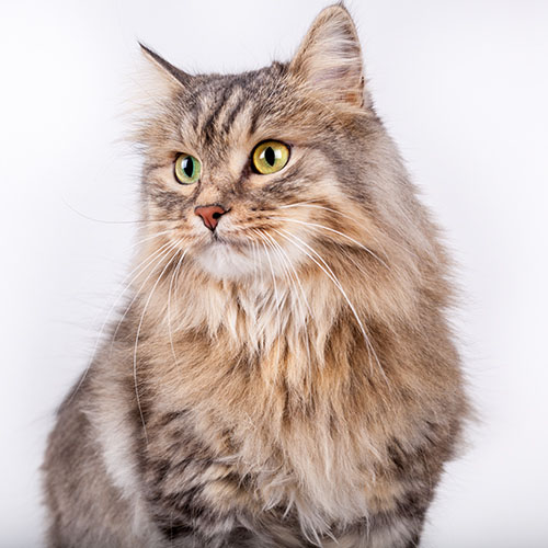 nozioni utili allergia epitelio gatto lofarma
